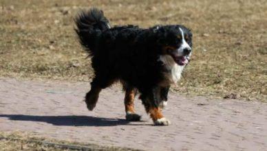 собака спасла жизнь ребенка, которого заживо похоронили в поле