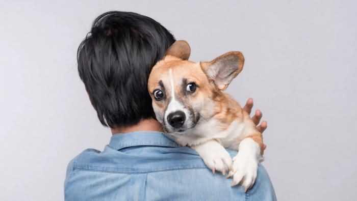 Отправляйтесь с агрессивной собакой к ветеринару