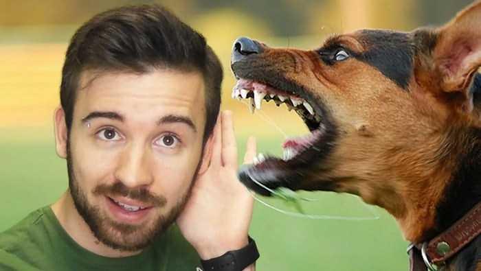 собака агрессивна