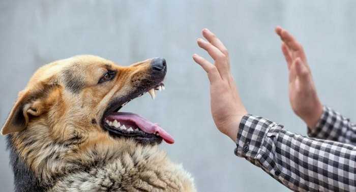 собака агрессивно реагирует на протянутую руку