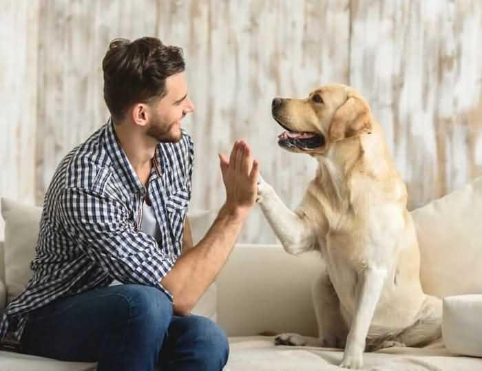 Верните доверие собаки