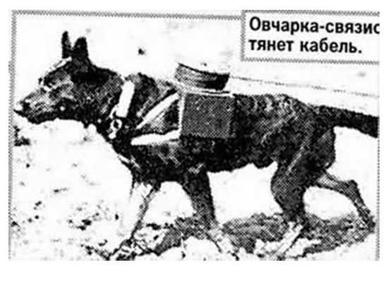 собака связист Великой Отечественной войны