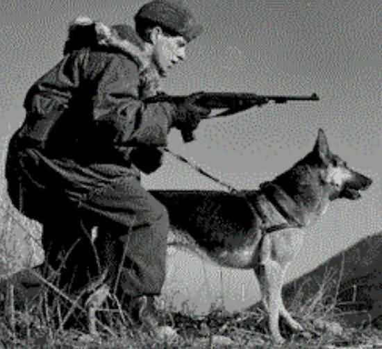 собака в битве Великая Отечественная война