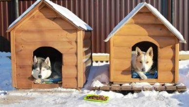 что постелить собаке в будку на зиму