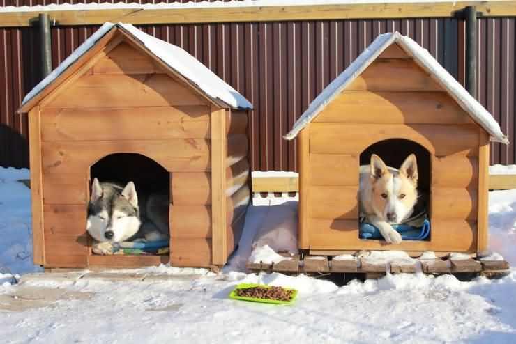 Что стелить собаке в будку? Самые часто используемые подстилки и их характеристики