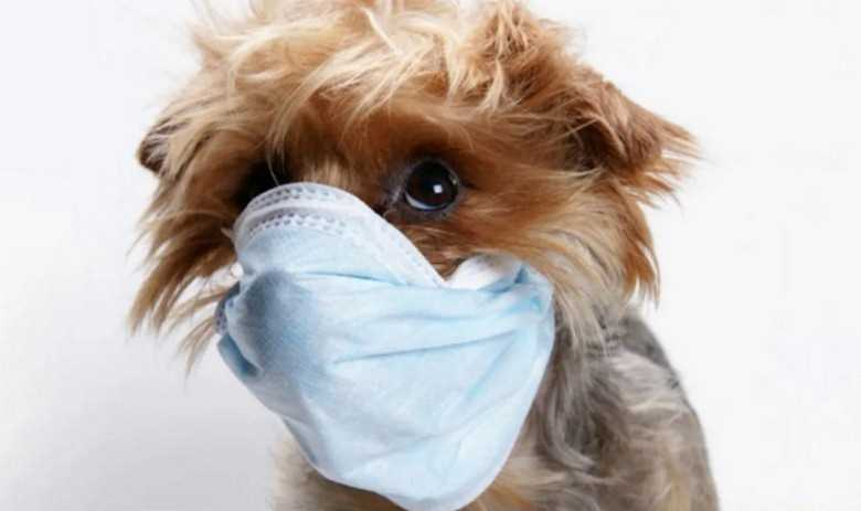 как защитить собаку от коронавируса covid-19