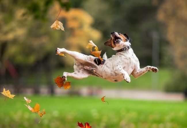собака в восторге