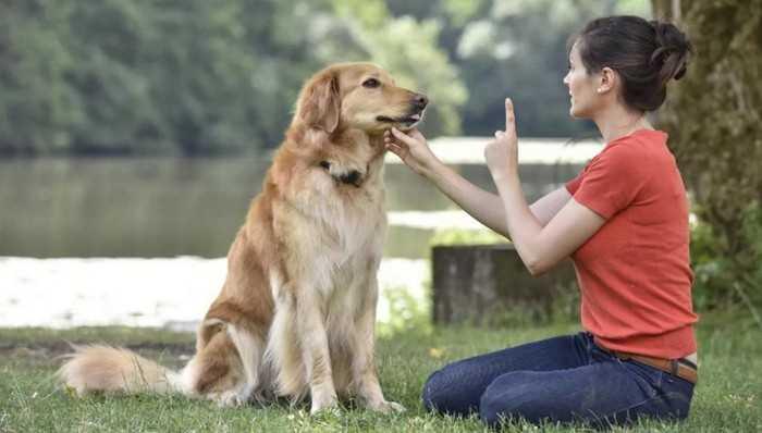 собака слушается