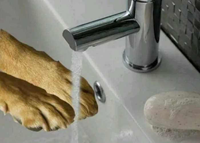 гигиена собак во время карантина по коронавирусу