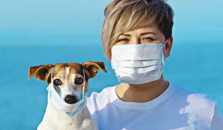 собаки и коронавирус covid-19