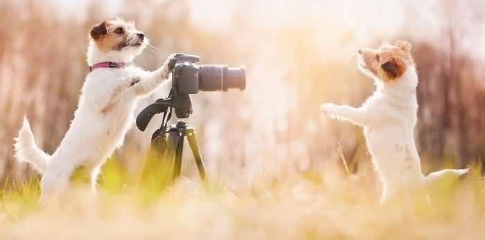 как определить породу собаки по фотографии
