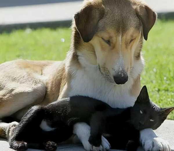 заблуждения про собак и кошек
