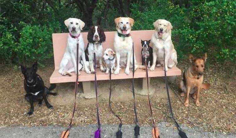 прогулка с собакой, собаки на скамейке