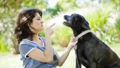собаки понимают речь