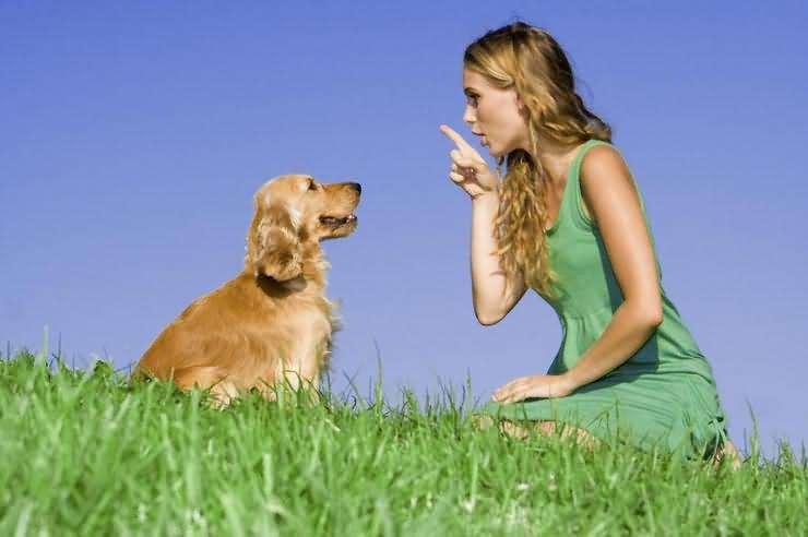 Собаки понимают слова и их интонацию - ученые доказали