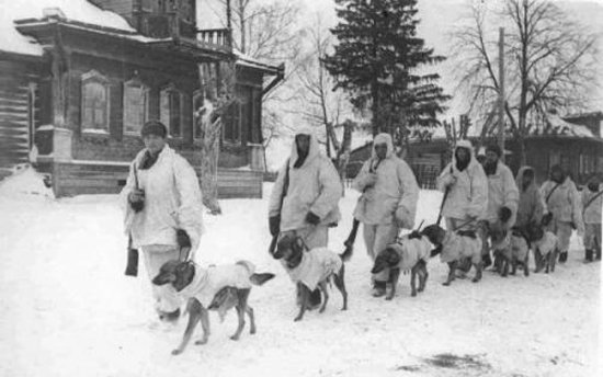 собаки разведчики Великой Отечественной войны