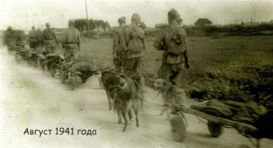 собаки санитары в 1941 году Великая Отечественная война