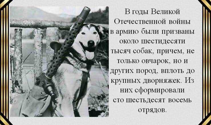 собаки Великой Отечественной войне