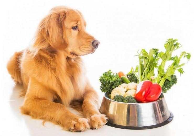 собаки вегетарианцы веганы