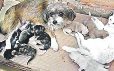 Чудо гармонии в природе: кошка и собака вместе воспитывают потомство