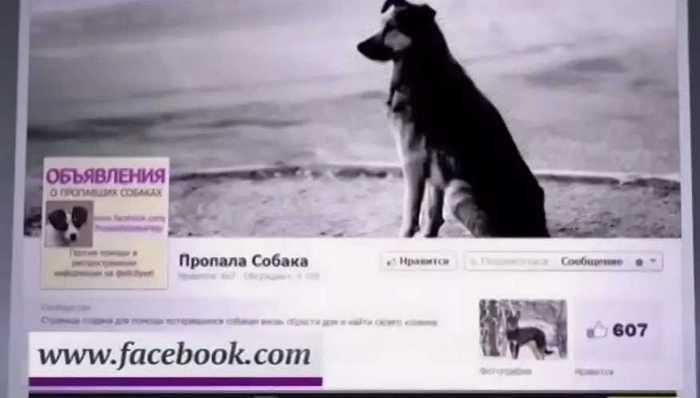 запустите объявление в соцсети о пропаже собаки