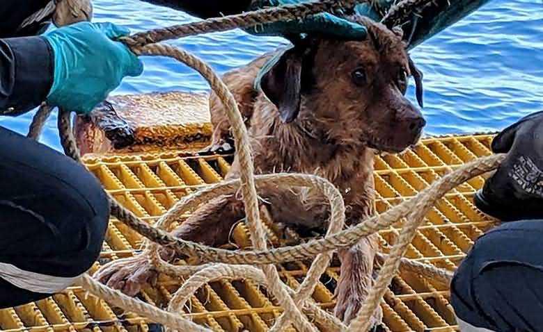 В Тайланде спасли собаку в 135 милях от берега