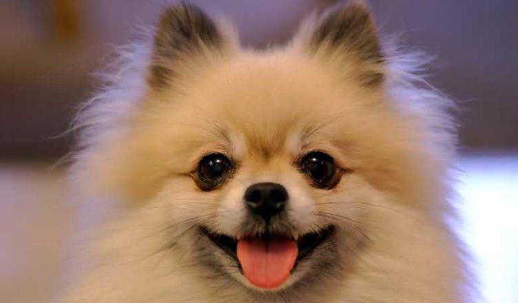 стихи про пословицы о собаках