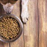 Можно ли кормить собаку одним и тем же сухим кормом постоянно?
