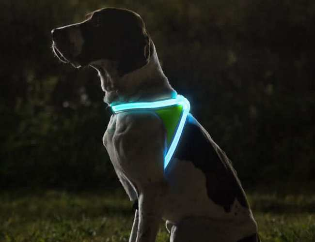 шлейка со светодиодами - светится в темноте