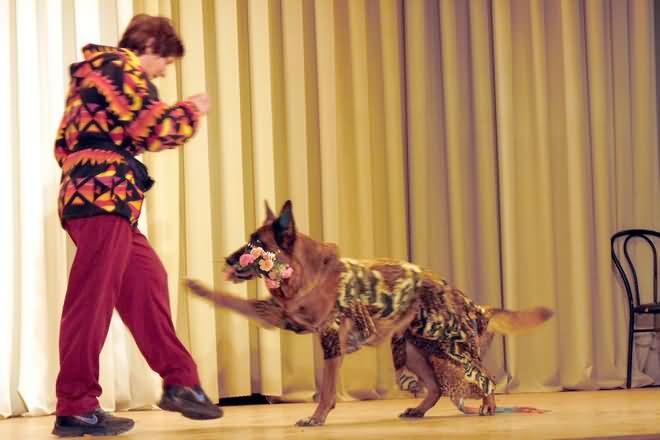"""Театр собак """"Школа Доброты"""" открылся в Череповце"""