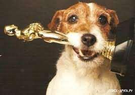 собака артист Угги получил Оскара