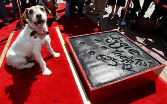 Собака артист Угги на Аллее славы