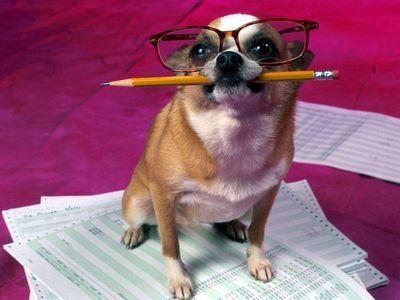 очень умные собаки