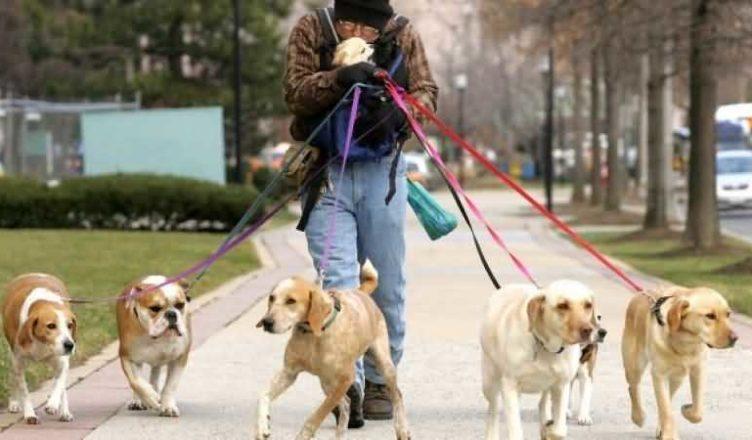 владелец шести собак прогуливается