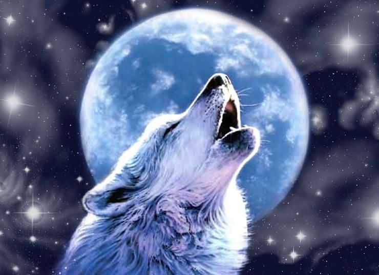 Почему воют собаки и волки на луну?