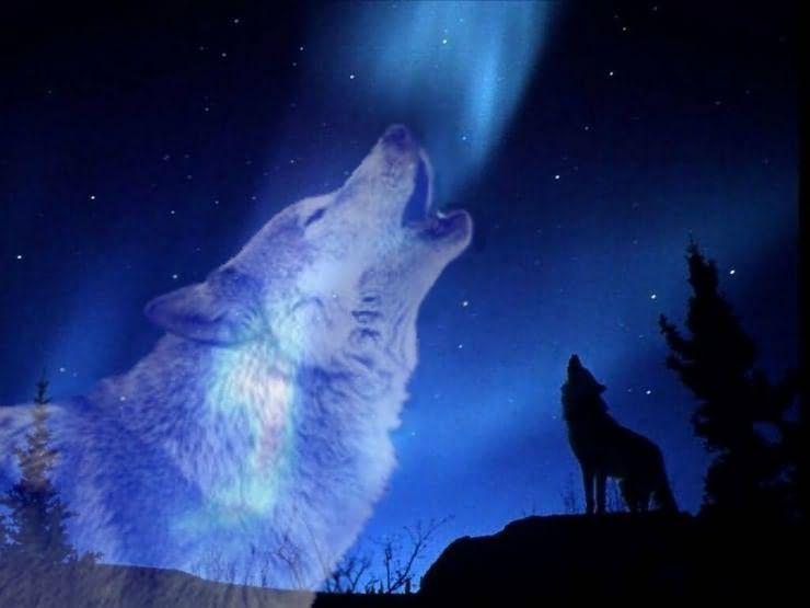 почему собаки и волки воют на луну