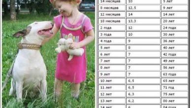 таблица возрста собак по отношению к человеческому возрасту