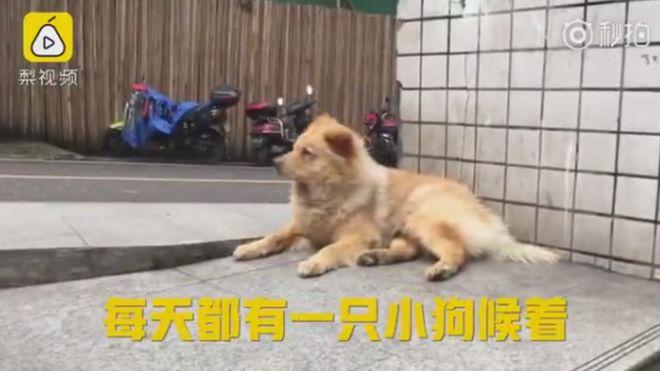 китайский Хатико по имени Медвежонок