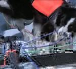 В московском яхт-клубе собака швартует корабли и поднимает паруса