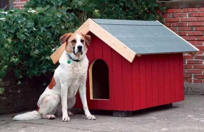 загадки про сторожевую собаку