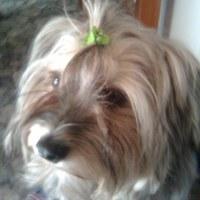 собака Зося