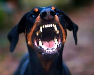 Ах, какие у вас зубы...