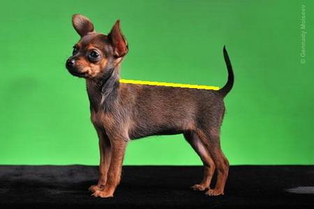 как вязать свитер для собаки для начинающих