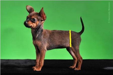 как вязать свитер для собаки крючком