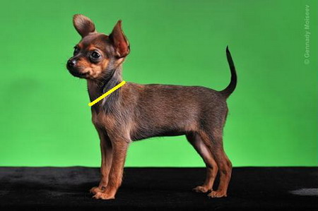 как вязать свитер для собаки для начинающих спицами